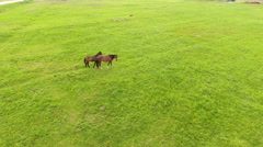 Aerial view:Horses grazing on the field Stock Footage