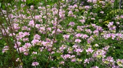 Glade with flowers clover Stock Footage