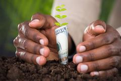 Close-up Of Person's Hand Protecting Plant Rolled With Banknote Stock Photos