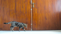 Cat walks under big wooden doors 4K Stock Footage