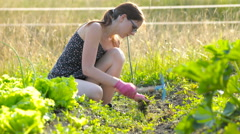 Woman with gloves removing weed with hoe 4K Stock Footage