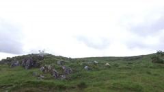 sheep grazing on hills of connemara in ireland - stock footage