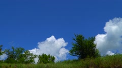 Trees on the edge of the ravine on a background of sky with clouds Stock Footage