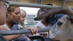 4K Family visiting community farm, feeding young cow or bull & talking to keeper Stock Footage