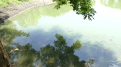 view of bamboo pier and fish swimming in the pond - stock footage