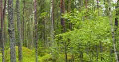 Wet summer forest of karelia shot from car Stock Footage