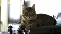 Beautiful tabby cat lie on hard case Stock Footage