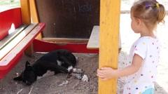 Little child kid girl wonder as street stray dog sleep on a children playground - stock footage