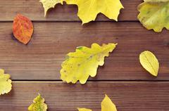close up of many different fallen autumn leaves - stock photo