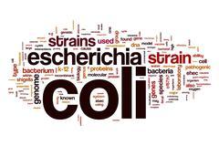 Escherichia coli word cloud concept Stock Illustration