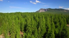 Aerial view of Oregon forest and mountains under blue sky 5 Stock Footage