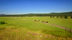 Aerial view of horses running in open green field with blue sky 3 Stock Footage