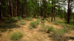 Drone view of mountain biker riding through woods Stock Footage