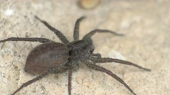 Spider on a rock. Macro video Stock Footage