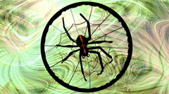 Crusader spider weaving web. Animated black spider on green blurry  background - stock footage