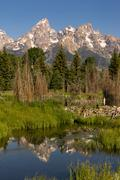 Smooth Water Beaver Dam Mountains Grand Teton National Park Stock Photos