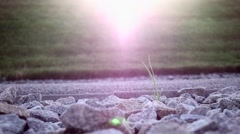Growth of the grass. Nature. Close up. Slow motion Stock Footage