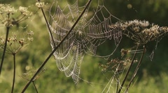 Spider web shaking on wind in forest Stock Footage