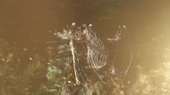 Spider web shaking on wind in forest - stock footage
