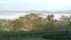 Australia Outlook Hill with tree and fog Stock Footage