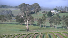 Australia Outlook Hill zooms from vineyard view Stock Footage