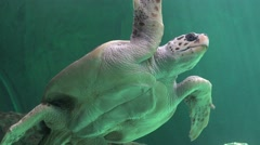 Stomach Or Belly Of Sea Turtle Stock Footage