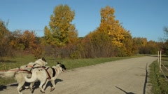 Competition dogsleds in autumn park Stock Footage