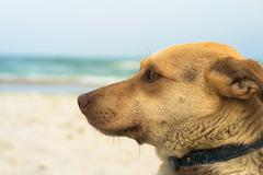 Portrait of a non-pedigreed dog on the beach Stock Photos
