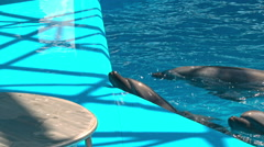 Dolphins in dolphinariums, dolphins frolic Stock Footage