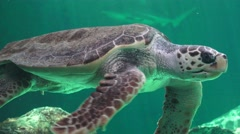 Sea Turtle And Other Marine Animals Stock Footage