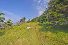 Remote Wind Blown Trail on an Ocean Coast Stock Photos