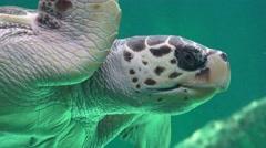 Sea Turtle Marine Life Stock Footage