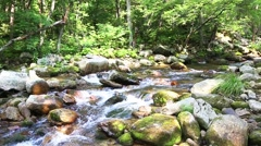 River in the Primorsky Krai. Siberia, Russian Far East. Stock Footage