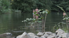 People bathe in the river. Stock Footage