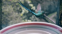 Hummingbird flies away from feeder Stock Footage