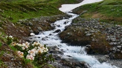 Stream at green spring hill and Flowers in High Snowy Mountains. Kavkaz region Stock Footage