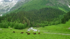 Herd of horses grazing on mountain valley with forest in Kavkaz region Stock Footage