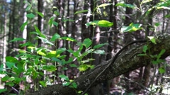 Sunny and shady in forest Stock Footage