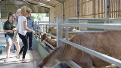 4K Happy mixed race family on community farm, petting llama & talking to keeper Stock Footage