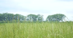 Close up green grass field with blur park background,Spring and summer Stock Footage