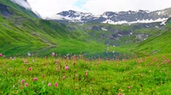 Meadow with flowers in motion near to high snowy mountain lake Stock Footage