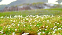 Meadow of daisies with falling raindrops Stock Footage