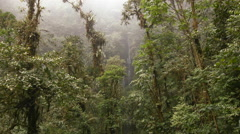 Waterfall and epiphyte laden trees in the rain Stock Footage