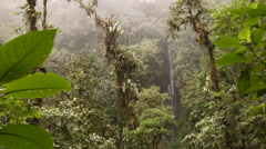 Waterfall and epiphyte laden trees in the rain. Time-lapse Stock Footage