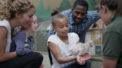 4K Parents & children at community farm, petting fluffy chick Stock Footage