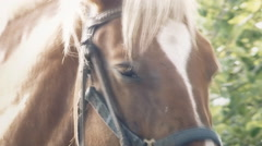 Horse eye bothered handheld Stock Footage