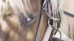 Horse eye sad shy zoom in handheld Stock Footage