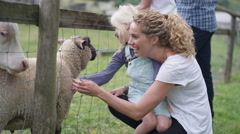 4K Happy families visiting community farm petting livestock through wire fence.  Stock Footage