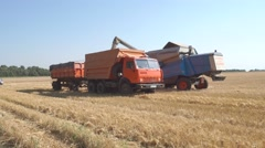 Combine grain pours into the truck-trailer. Stock Footage