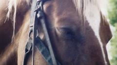 Horse eye sleepy handheld Stock Footage